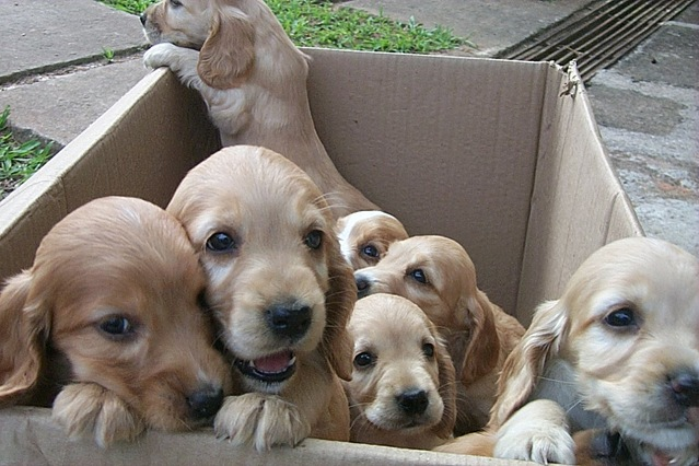 dogs-in-a-box